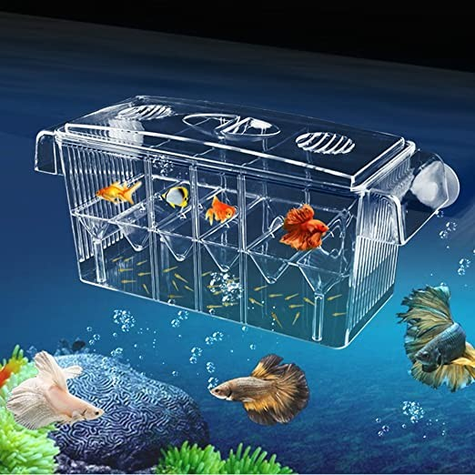 HD Fish Breeding Box