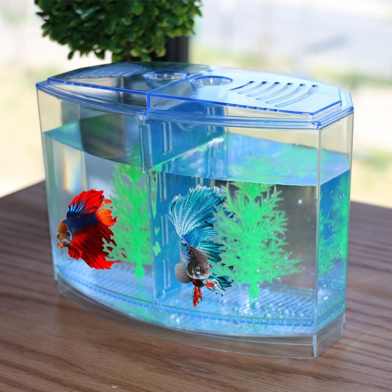 Mini Aquarium Betta Box